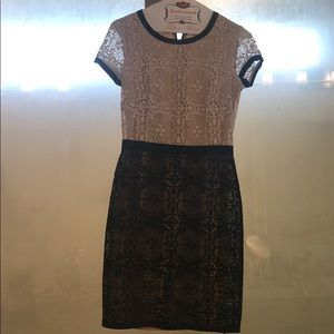 Bailey 44 cream and black lace dress